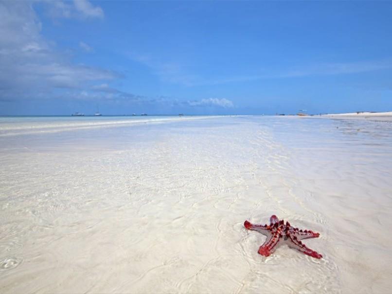 Palumboreef Resort (fotografie 4)