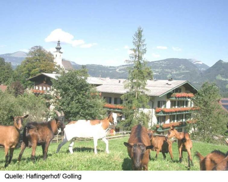 Hotel Haflingerhof (fotografie 5)