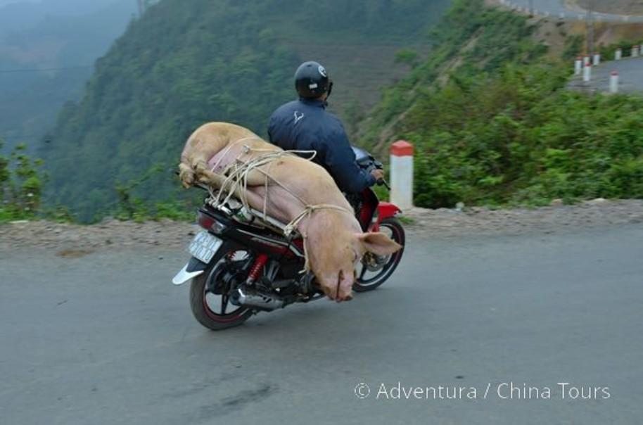Vietnam na motorkách pro každého (fotografie 10)