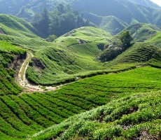 Prázdniny v Malajsii