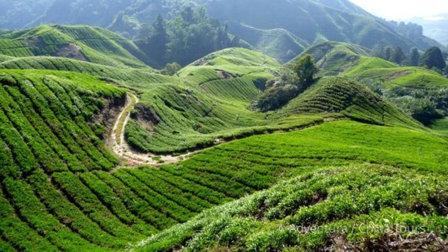 Prázdniny v Malajsii (fotografie 1)