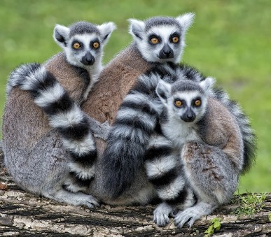 Madagaskar – přírodní ráj planety (hlavní fotografie)