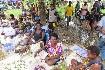 Papua Nová Guinea – Jedinečný festival barev Goroka (fotografie 13)