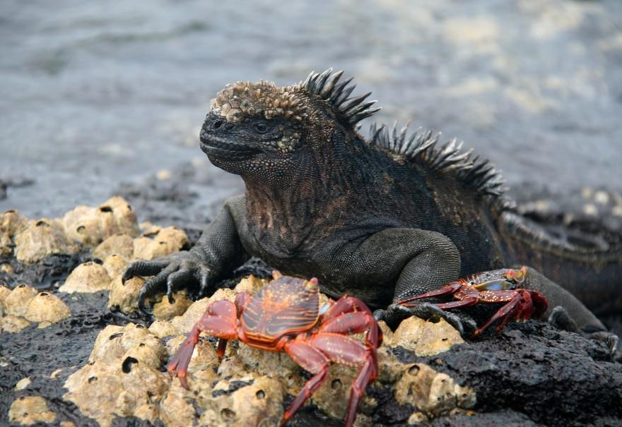 Galapágy - Ráj zvířat na ostrovech v Pacifiku (fotografie 10)