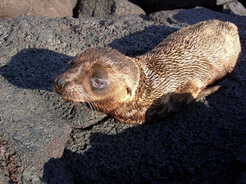 Galapágy - Ráj zvířat na ostrovech v Pacifiku (fotografie 30)