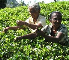 To nejlepší ze Srí Lanky okruh