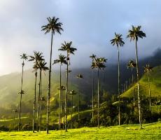 To nejlepší z Kolumbie + údolí Cocora + koupání na Karibském pobřeží