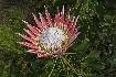Západní Kapsko (fotografie 5)