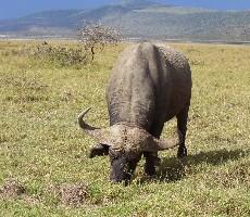 Keňa – velká cesta pro fajnšmekry