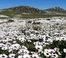 7 denní odpočinek v přírodě Jihoafrické Republiky