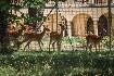 Chateau Kynšperk (fotografie 3)