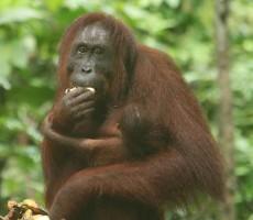 Okruh Borneo Sabah