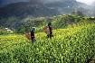 Panenskou krajinou Severního Vietnamu (fotografie 2)