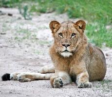 12 denní safari balíček + poznávání JAR