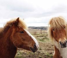 Island aktivně - nejkrásnější treky