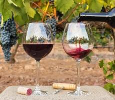 Na jižní Moravu nejen za vínem