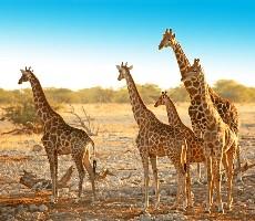 Rozmanité krásy Namibie se safari