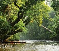Malajsie a deštné pralesy