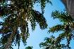 Hotel Sandies Tropical Village (fotografie 2)