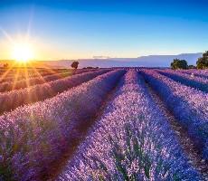 Nejkrásnější místa Provence (autokarem)
