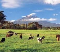 Austrálie - Nový Zéland